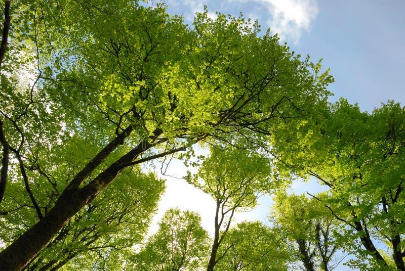 Frühlingswaldland lizenzfreies stockbild