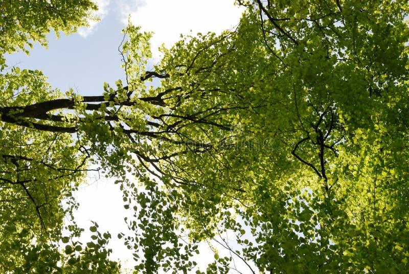 Frühlingswaldland in Bretagne lizenzfreie stockbilder