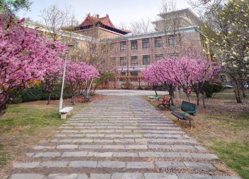 Frühlingsweg im Garten lizenzfreie stockfotos