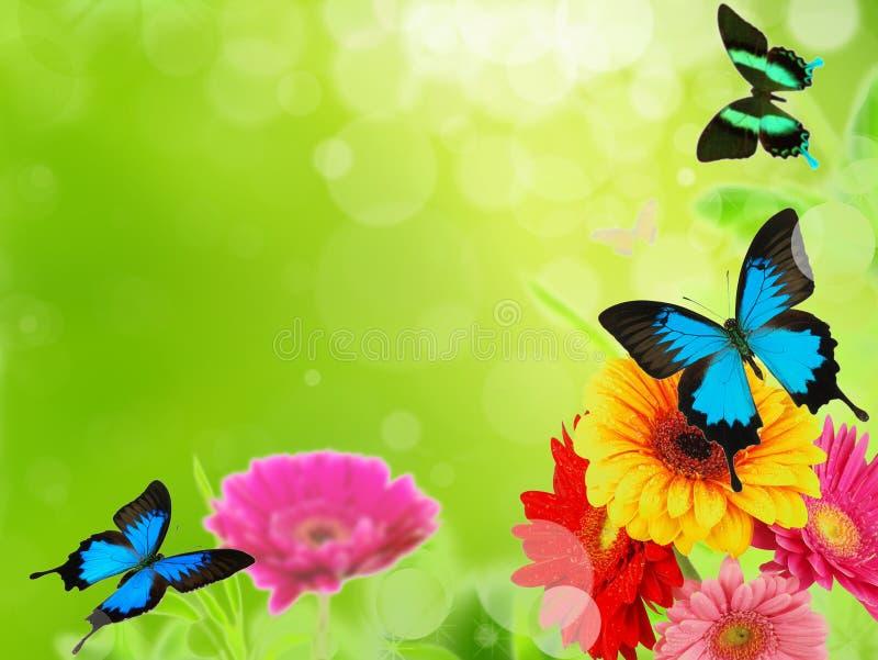 Frühlingswiese stockbild