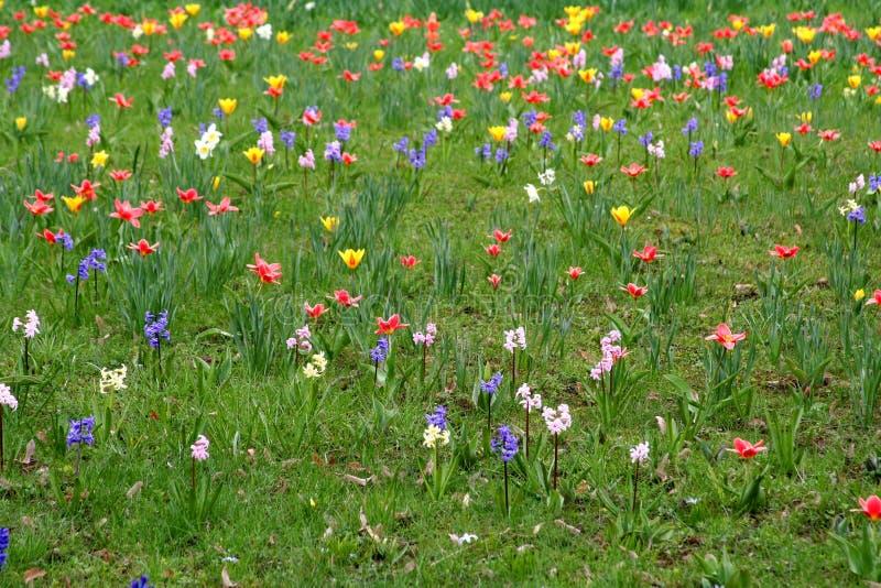 Frühlingswiese lizenzfreies stockbild