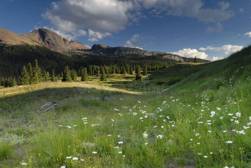 Frühlingswiese in den San- Juanbergen in Kolorado stockbild