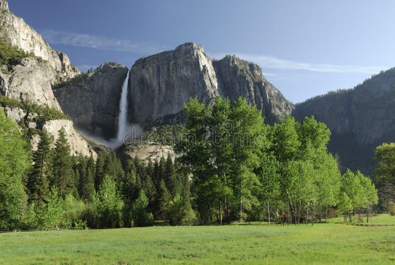 Frühlingswiese im Yosemite-Tal stockfoto