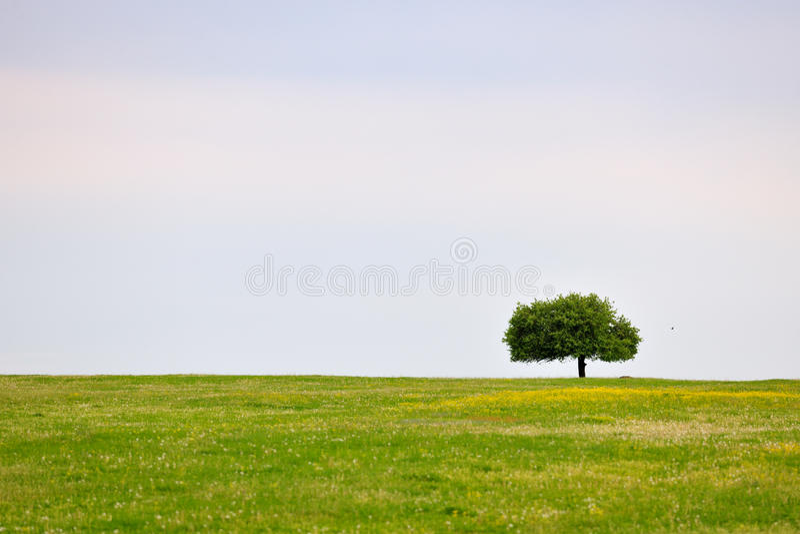 Frühlingswiese mit Baum lizenzfreie stockbilder
