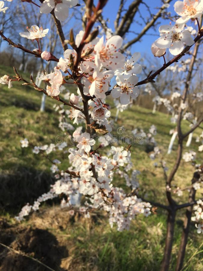 Frühlingszeit… Rosenblätter, natürlicher Hintergrund lizenzfreie stockfotos