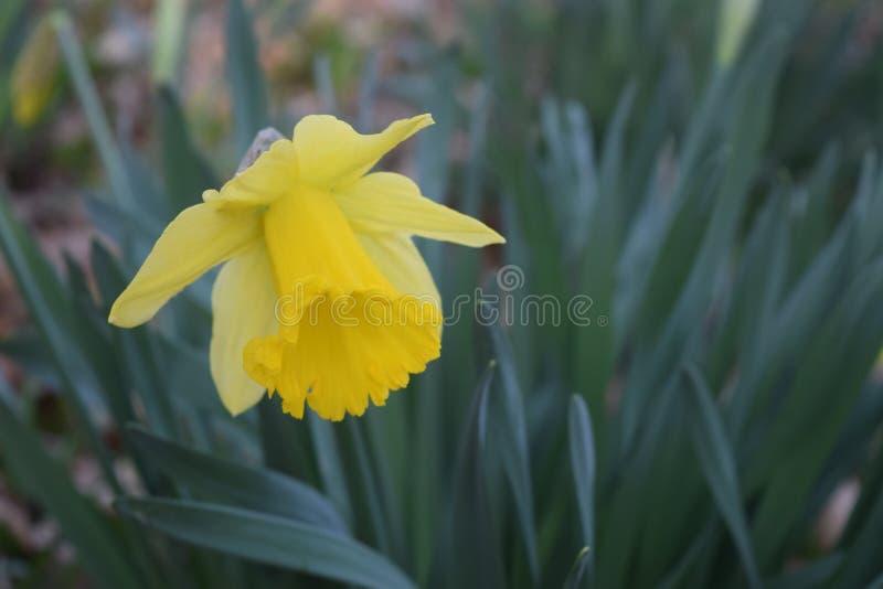 Frühlingszeit… Rosenblätter, natürlicher Hintergrund stockbild