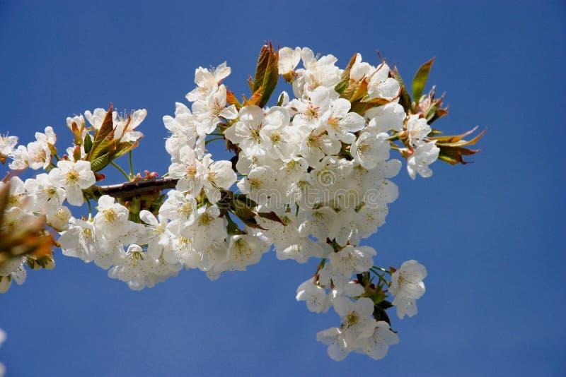 Frühlingszeit lizenzfreie stockbilder