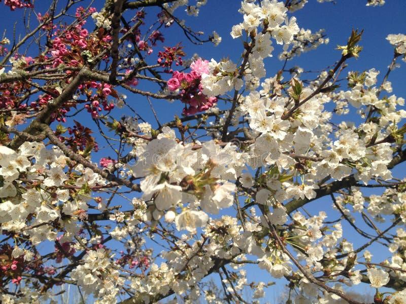 Frühlingszeit der Blütenblüte im April lizenzfreie stockfotos