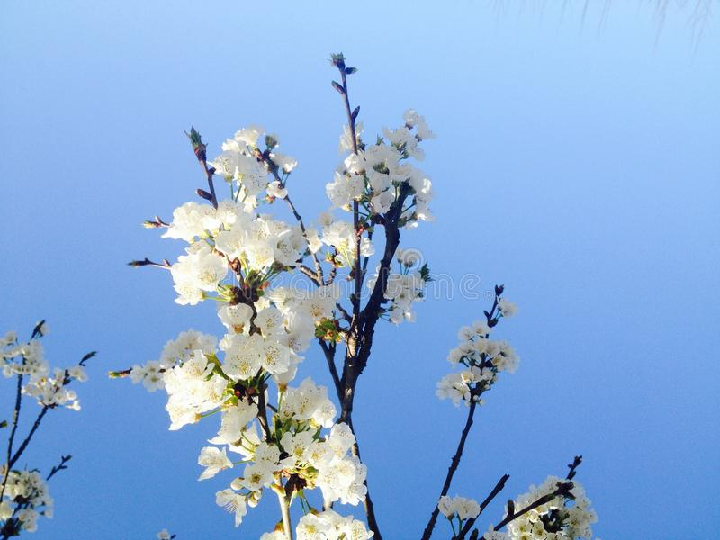 Frühlingszeit der Blütenblüte im April stockbild