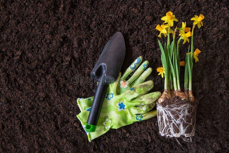 Frühlingszeit, Saisonanlagen pflanzend nasals lizenzfreie stockfotografie