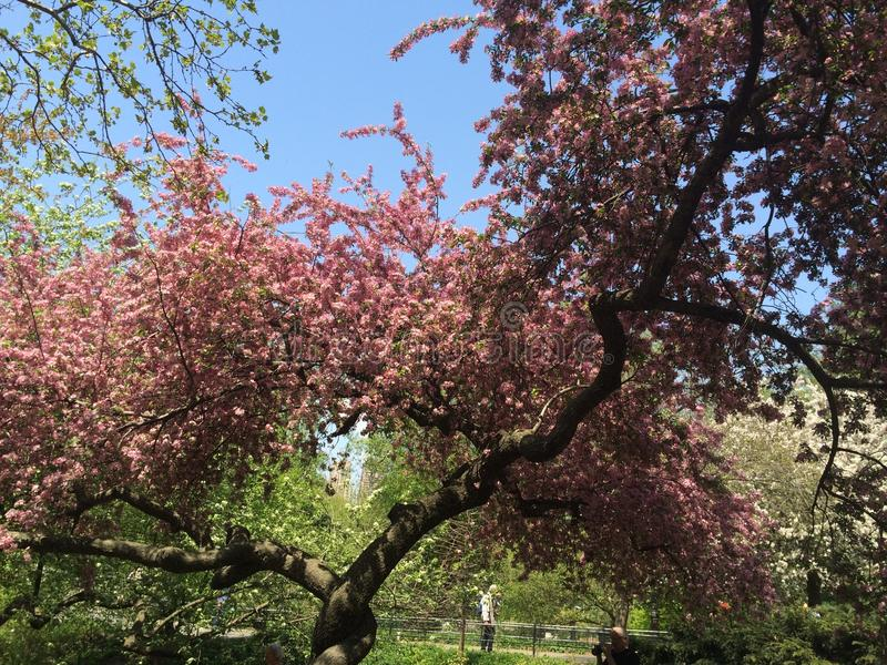 Frühlingszeitblüte stockbild