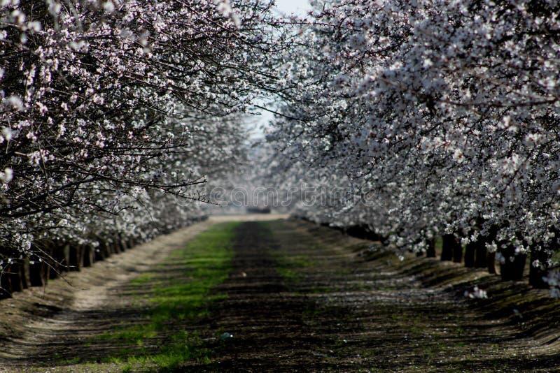 Frühlingszeitblüte stockfotos