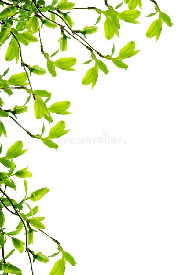 Frühlingszweigfeld stockbilder
