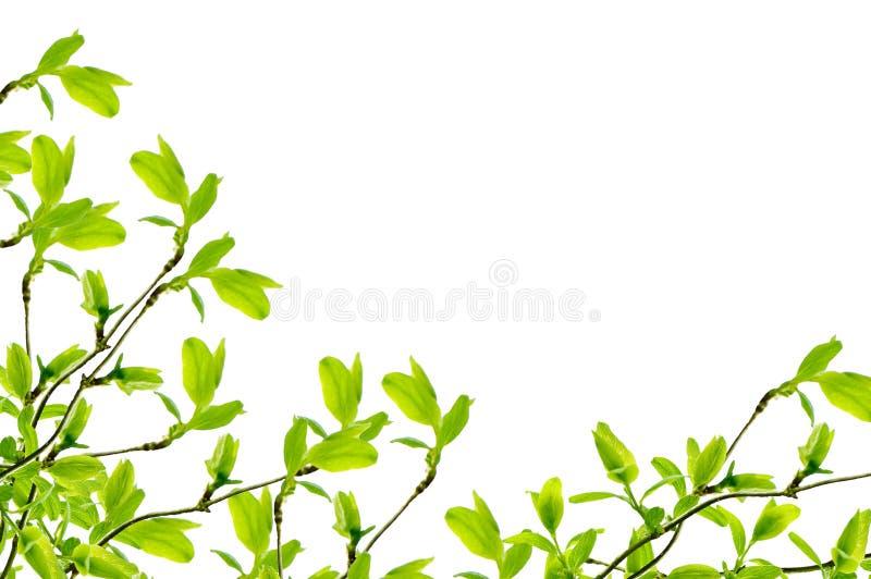 Frühlingszweigfeld stockbild