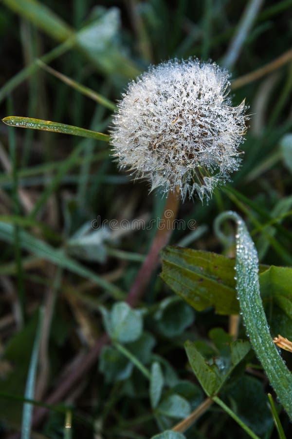 Frühmorgens frisches Pflanzensaatgut lizenzfreies stockbild