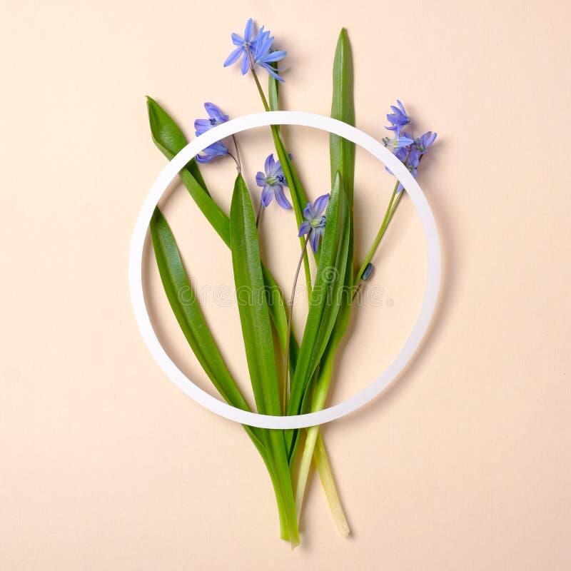 Fr?hling bl?ht Konzept Blumenstrau? von zarten Blumen und von Kreisform gemacht vom Papier auf beige Pastellhintergrund kreativ stockbilder