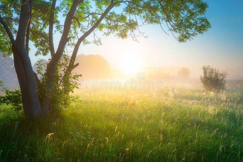 Fr?hling oder Sommer-Landschaft Gr?nes Naturkonzept stockfotos