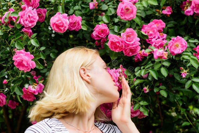 Fr?hling und Sommer Parf?m und Kosmetik Frau vor blühendem Rosenbusch Blüte von wilden Rosen Englischer Gartenpfad und -t?ren stockbild