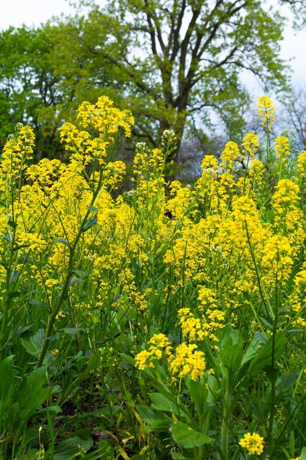 Fr?hling Wildflowers lizenzfreies stockbild