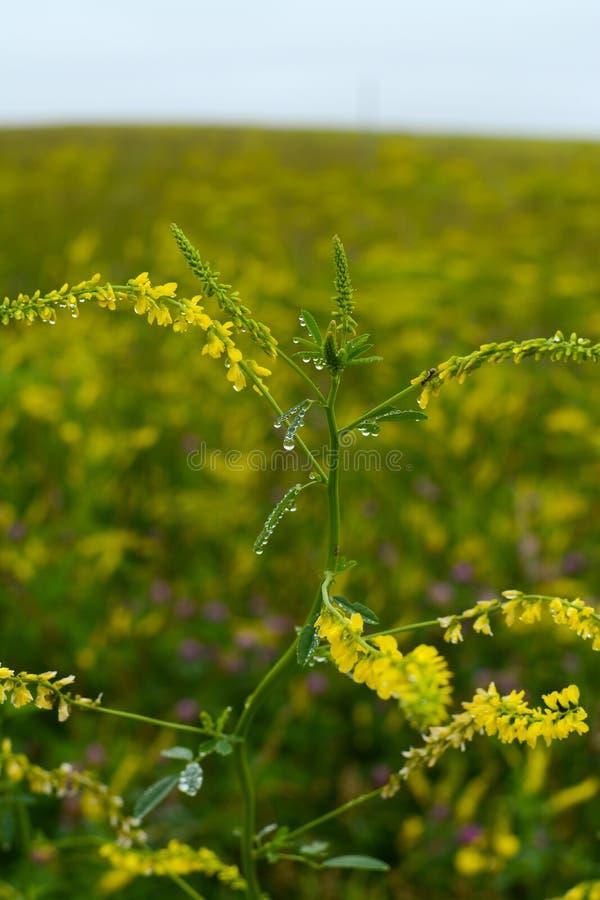 Fr?hling Wildflowers lizenzfreie stockbilder