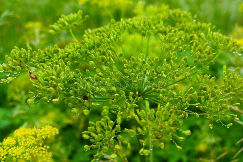 Fr?hling Wildflowers stockbild