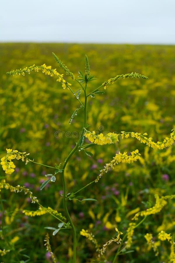 Fr?hling Wildflowers lizenzfreie stockfotografie