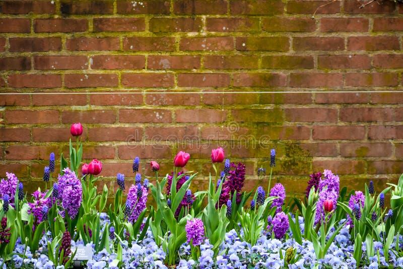 Fr?hlings-Blumen-Backsteinmauer-Hintergrund stockfotografie