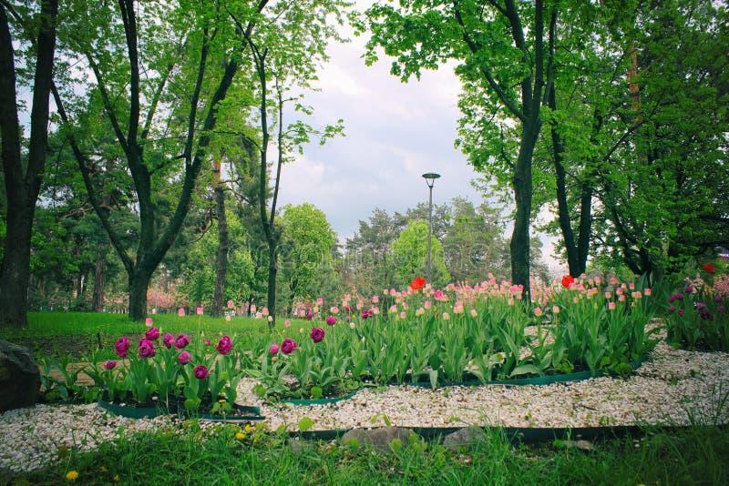 Fr?hlings-formaler Garten Sch?ner Garten der bunten Blumen Tulpenentwurf im Garten stockfotos