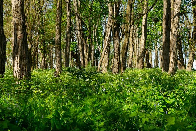 Fr?hlings-Vegetation stockfotografie