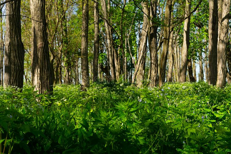 Fr?hlings-Vegetation stockfoto