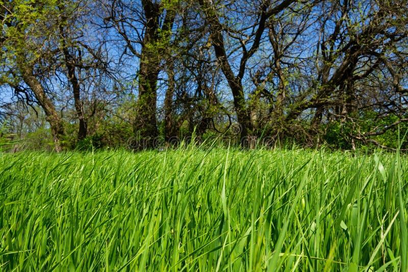 Fr?hlings-Vegetation lizenzfreie stockfotos