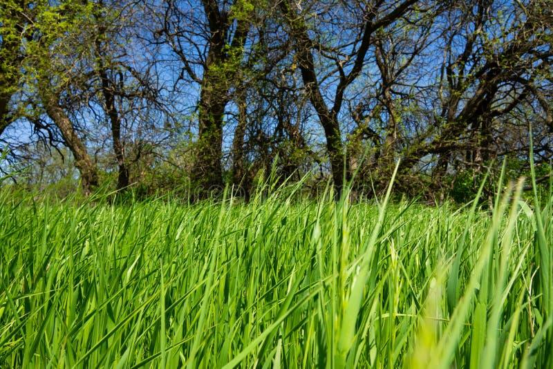 Fr?hlings-Vegetation lizenzfreie stockfotografie