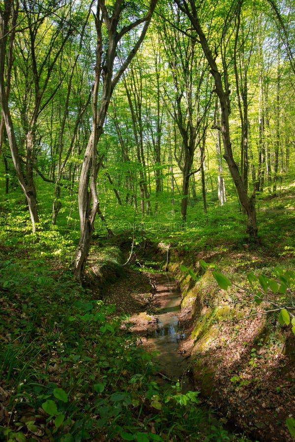 Fr?hlings-Zeit f?r die T?rkei im April 2019 Belgrad-Wald, heller Tag lizenzfreies stockfoto