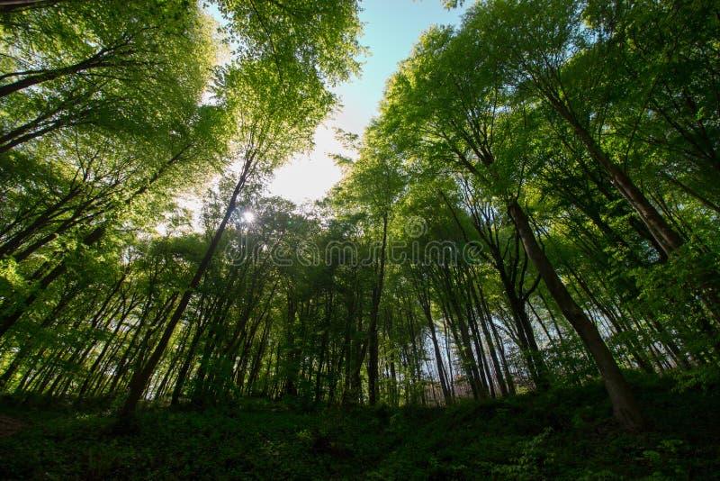 Fr?hlings-Zeit f?r die T?rkei im April 2019 Belgrad-Wald, heller Tag lizenzfreies stockbild