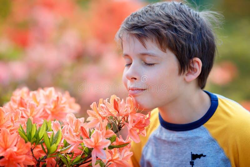Fr?hlingsportr?t von netten attraktiven 10-j?hrigen Junge riechenden bl?henden rosa Rhododendron im Garten stockbilder