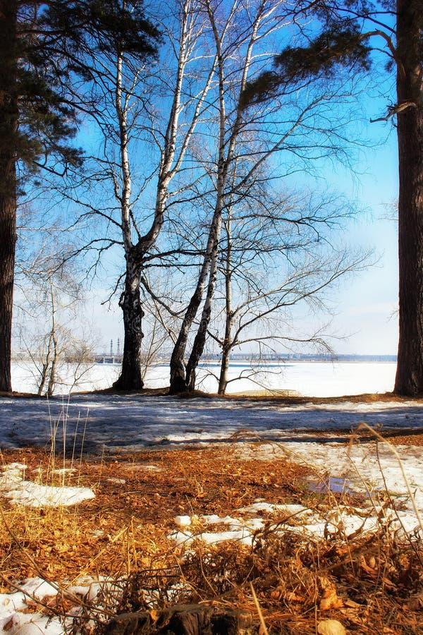 Fr?hlingswald und blauer Himmel stockfotografie