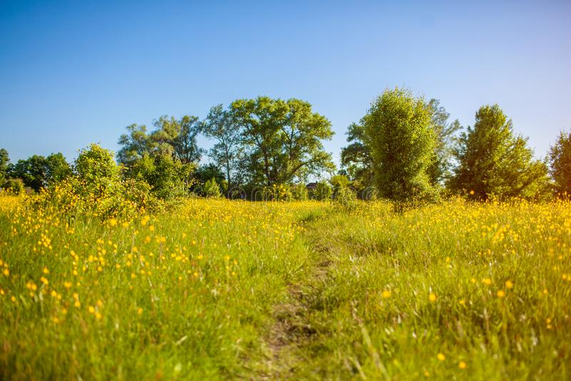 Fr?hlingsweidelandschaft Ländlicher Weg umgeben mit Gras und gelben Blumen Nat?rlicher Hintergrund lizenzfreies stockfoto