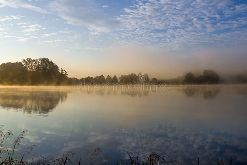 Fr?hsommermorgen in dem Teich stockfoto