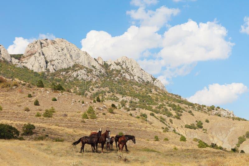 Frôlez les chevaux photographie stock libre de droits