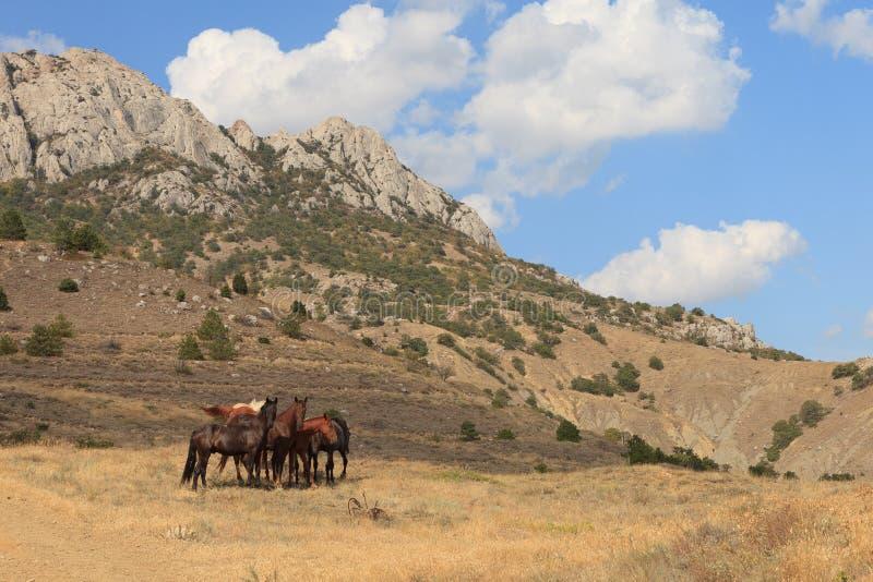 Frôlez les chevaux image libre de droits