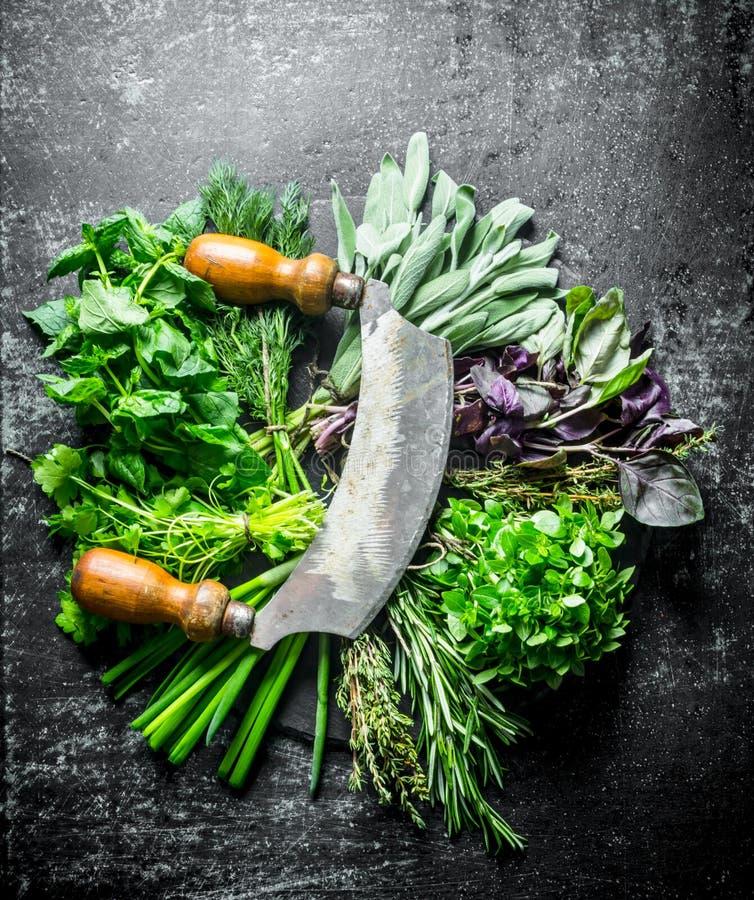 Fraîchement herbes de coupe pour la salade photo libre de droits