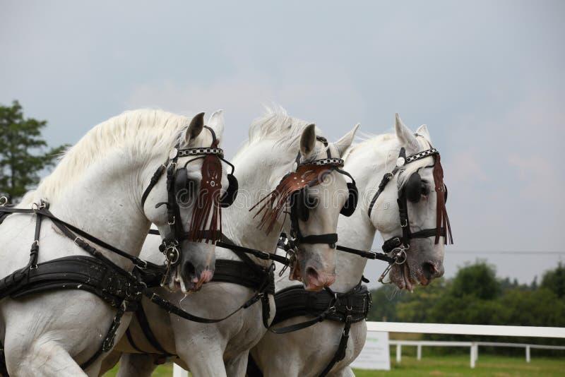 fracht rysujący koń obraz royalty free