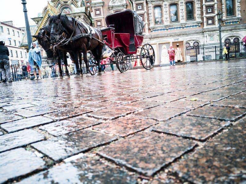 Fracht z koniami zdjęcie stock