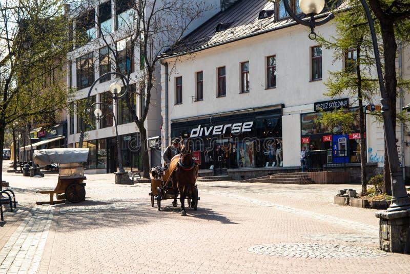 Frachty z koniami dla turystów na ulicie w Zakopane obraz royalty free