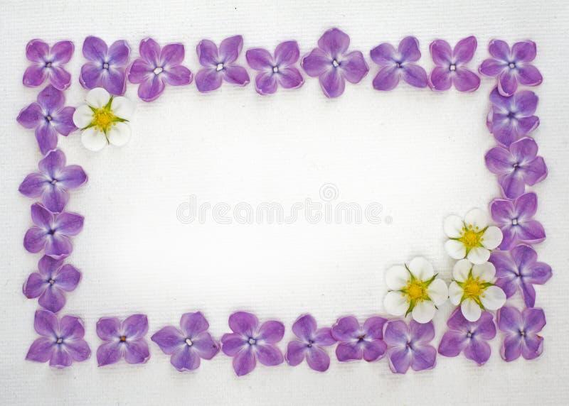 fractal λουλουδιών απεικόνιση πλαισίων στοκ φωτογραφία με δικαίωμα ελεύθερης χρήσης