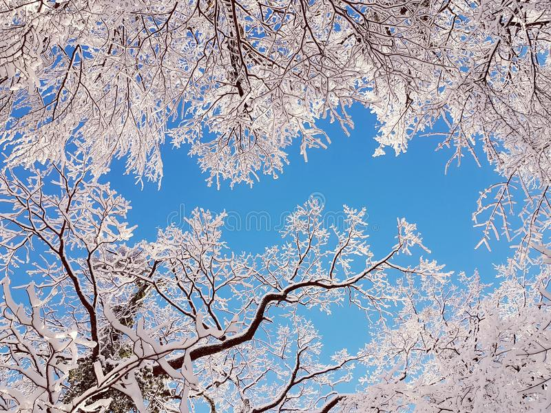 Fractal χειμερινή ομορφιά στοκ εικόνες με δικαίωμα ελεύθερης χρήσης