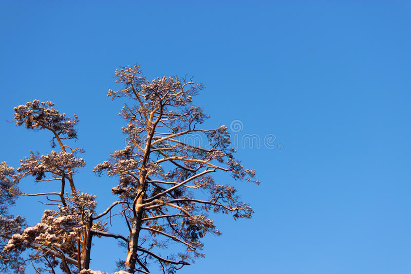 fractal abstrakcyjna nocy obrazu zima objętych śnieżni drzewa obraz royalty free