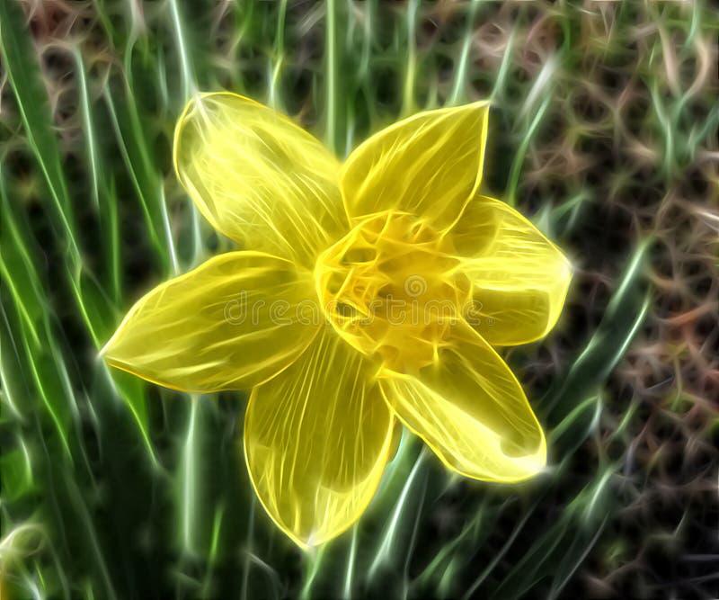 Fractal bloemnarcissen stock foto