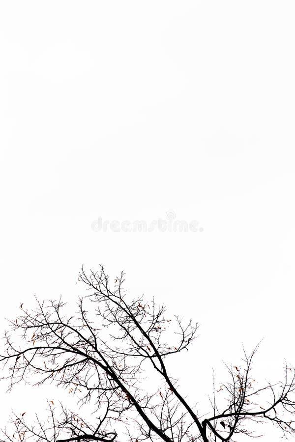 Fractal im Himmel stockfotografie
