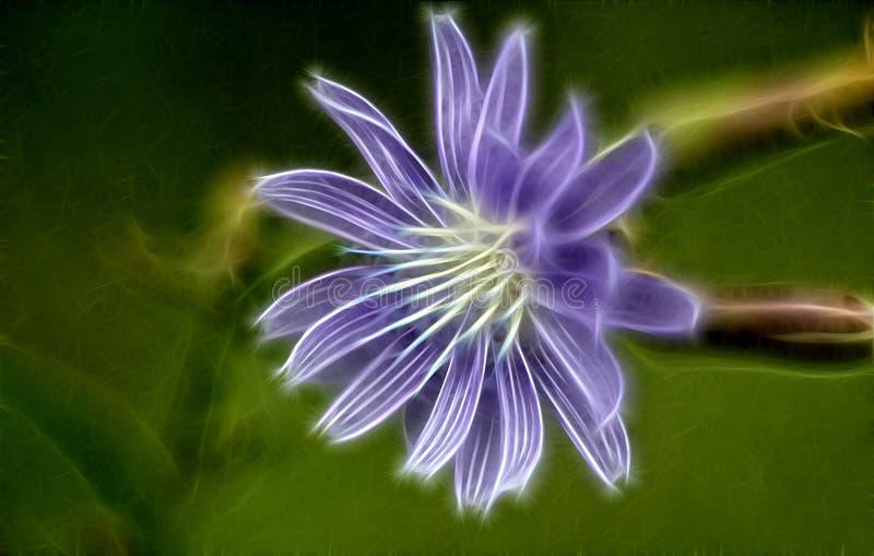 Fractalbild einer Blume der Zichorie lizenzfreie stockfotos